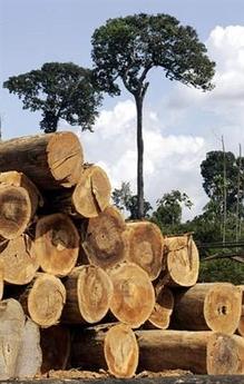 Amazon logging 6  bigger