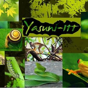 Yasuni - New Beams of Hope
