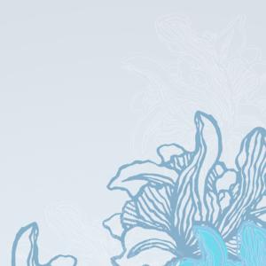 Irises Bloom