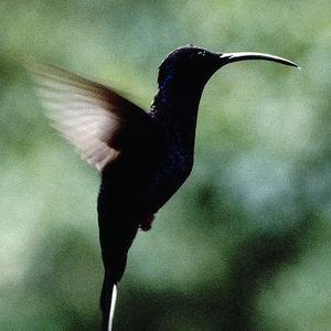 Länger Vögeln