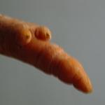 carrot_studio